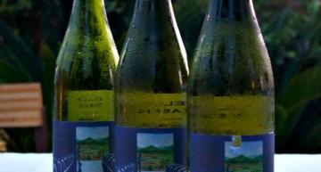 Vi blanc del Massís